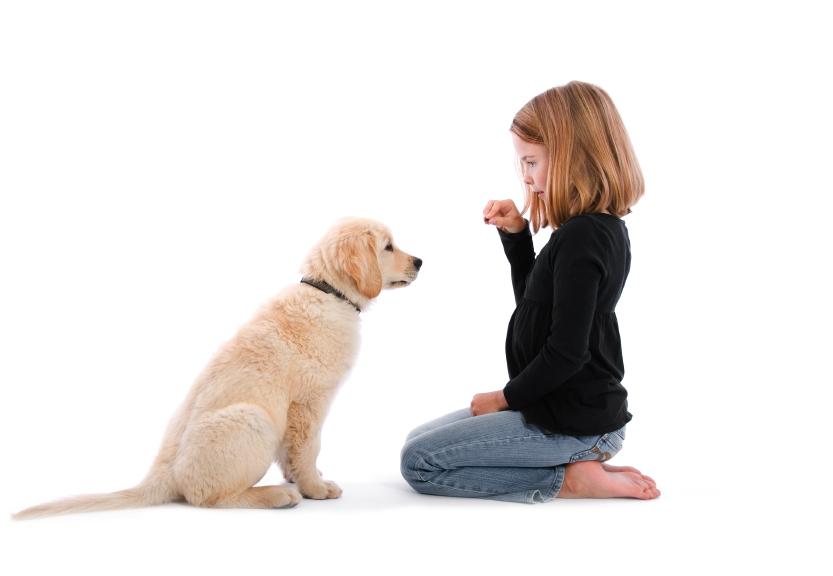 Leash Training Adult Dogs